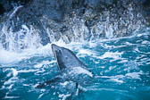 Akora_Dolphin_Trip-111
