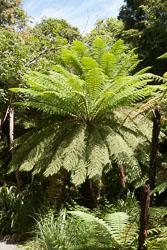 Christchurch_Botanic_Gardens-085.jpg