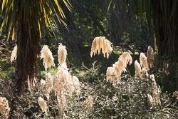 Christchurch_Botanic_Gardens-251.jpg