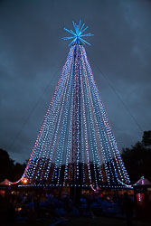 Christchurch_Christmas_Tree-011.jpg