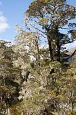 Lewis Pass, Nature Walk 021