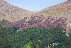 Queenstown_Hill_028.jpg