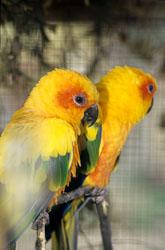 Bird_261.jpg
