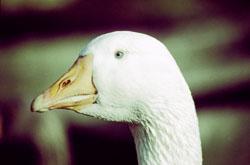 Bird_450.jpg