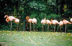 Flamingo_003.jpg