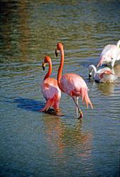 Flamingo_007.jpg