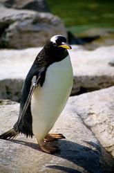 Penguin_001.jpg