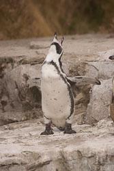 Penguin_010.jpg