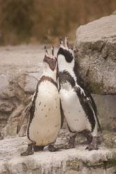 Penguin_012.jpg