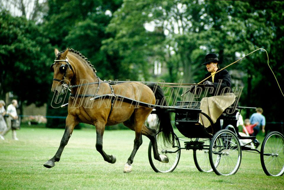 Horse_023.jpg