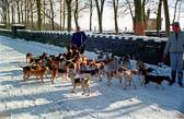 Colne Valley Beagles, Snow 001
