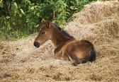 Foal & Mare 008