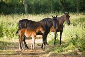 Foal & Mare 032