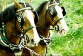 Horse 015-2