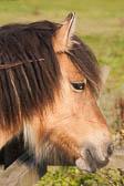 Horse 203