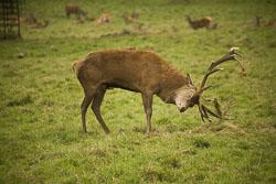 Deer_018.jpg