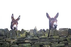 Donkeys-002.jpg