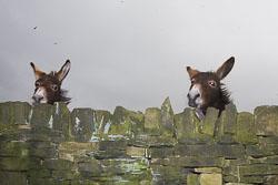 Donkeys-004.jpg