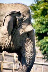 Elephant_007.jpg