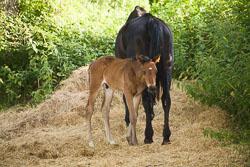 Foal_-_Mare_011.jpg