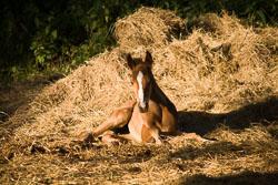 Foal_-_Mare_015.jpg