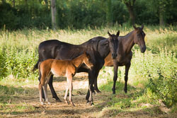 Foal_-_Mare_032.jpg