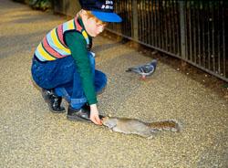 Squirrel,_Grey_007.jpg