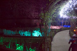 Enchanted_Brodsworth-117.jpg