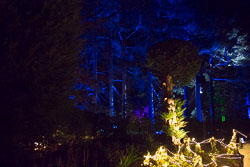 Enchanted_Brodsworth-130.jpg