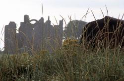 Lindisfarne_Priory-039.jpg