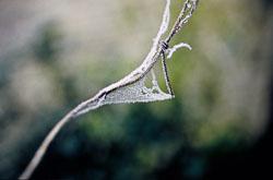 Iced_Barb-001.jpg