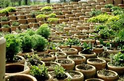 Pots-001.jpg