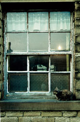 Reggies_Window_and_Cat-001.jpg