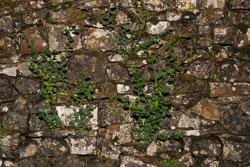 Wall-003.jpg