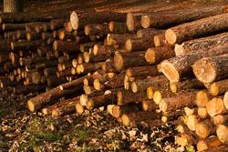 Logs_-002.jpg