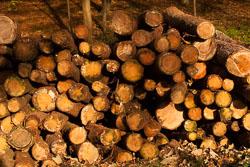 Logs_-005.jpg