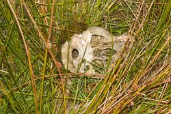 Skull,_K_2002.jpg
