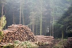 Thickwoods,_Langsett_-010.jpg
