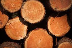 Thickwoods,_Langsett_-015.jpg