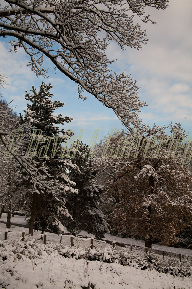Snow,_Beaumont_Park_-101.jpg