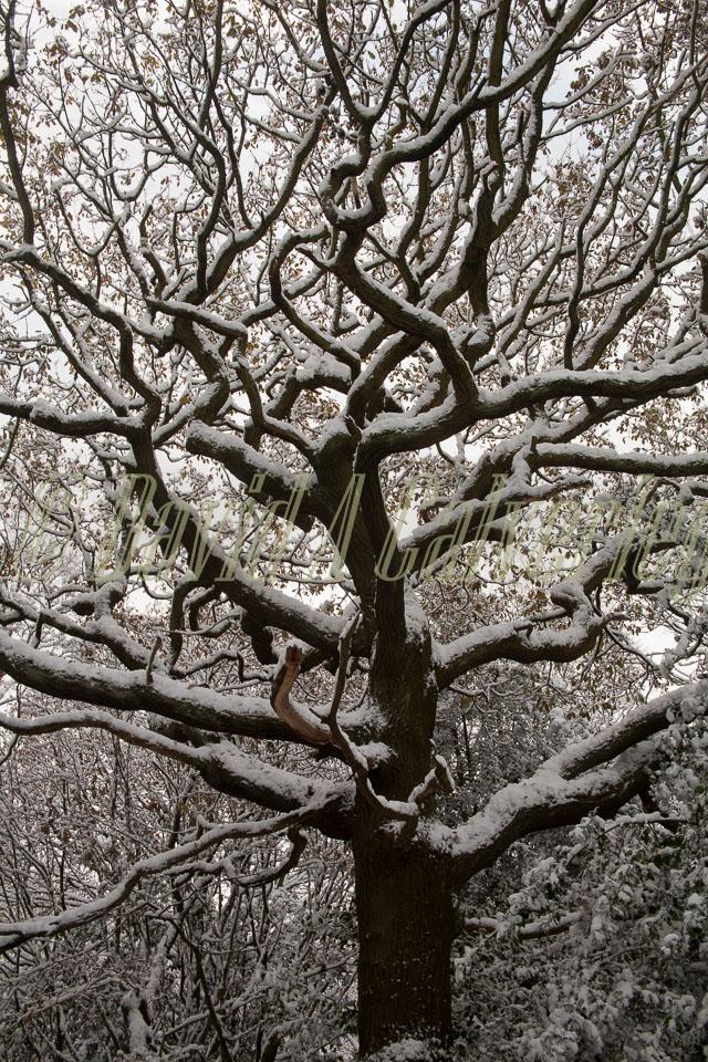 Snow,_Delves_Wood_-014.jpg