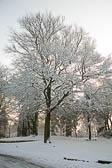 Beaumont Park _112