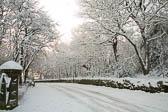 Beaumont Park _114