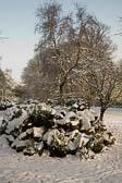 Beaumont Park _122