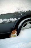Car, Cat, Snow 006