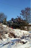 Golcar, Snow 003