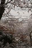 Snow, Beaumont Park -104