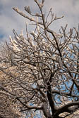 Snow, Beaumont Park -105