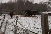 Snow, Crosland Hill -003