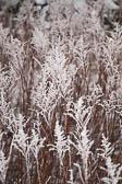 Snow, Crosland Hill -006